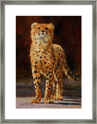 Cheetah Cub Framed Print by David Stribbling