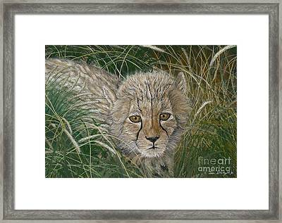Cheetah Cub Framed Print