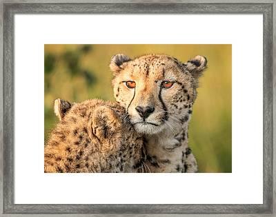 Cheetah Eyes Framed Print by Jaco Marx