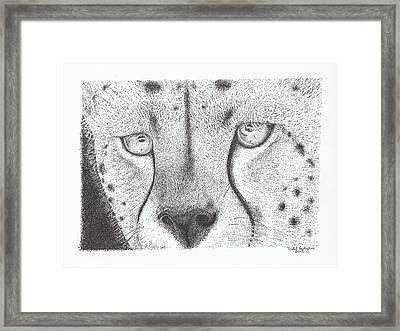 Cheetah Face Framed Print by Todd Hodgins