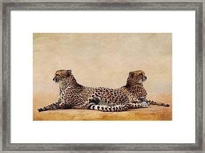 Cheetah Framed Print by Heike Hultsch