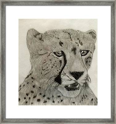 Cheetah II Framed Print by Noah Burdett