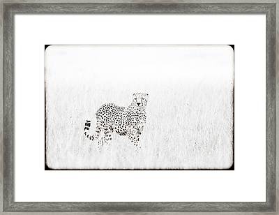 Cheetah In The Grass Framed Print