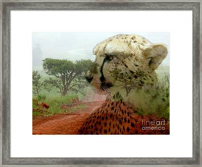Cheetah In The Wilderness Framed Print by Annie Zeno