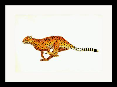 Cheetahs Framed Prints