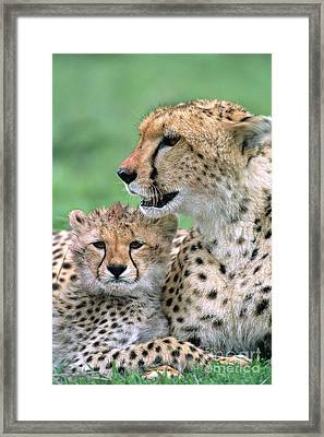 Cheetah Mother And Cub Framed Print by Yva Momatiuk John Eastcott