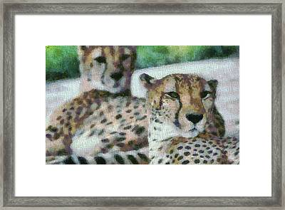 Cheetah Portrait Framed Print by Dan Sproul