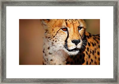 Cheetah Portrait Framed Print by Johan Swanepoel