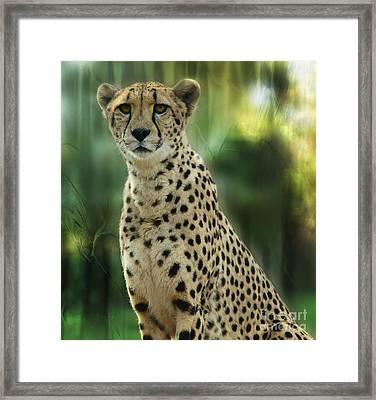 Cheetah Spots Framed Print