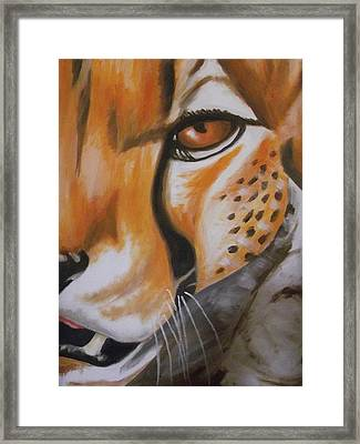 Cheetah Up Close Framed Print by Scott Dokey