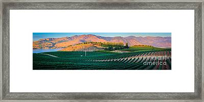 Chelan Vineyard Panorama Framed Print by Inge Johnsson