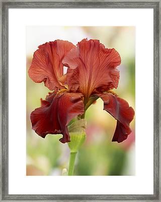 Chelsea Iris Framed Print by Rona Black