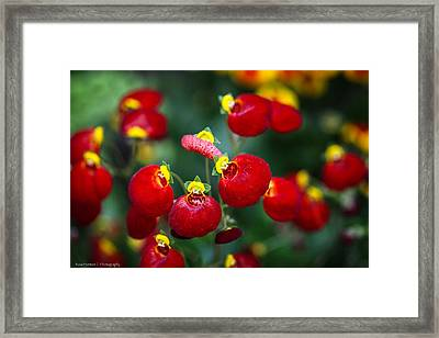 Framed Print featuring the photograph Chelsea Red by Ross Henton