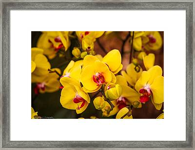 Framed Print featuring the photograph Chelsea Yellow by Ross Henton