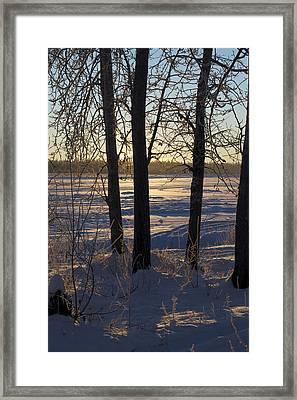 Chena River Trees Framed Print