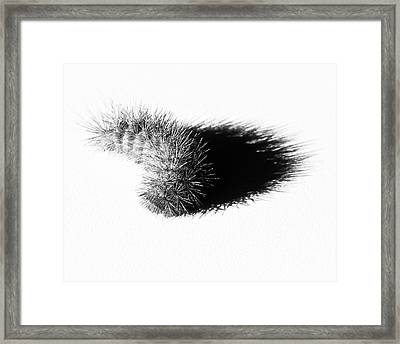 Framed Print featuring the photograph Chenille by Lawrence Burry