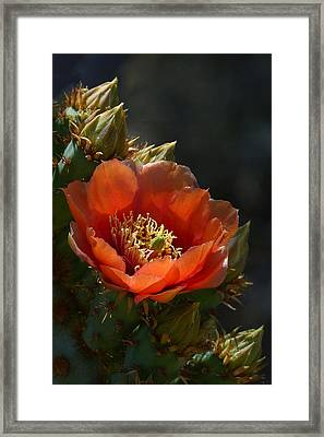Framed Print featuring the photograph Chenille Prickly Pear Bloom And Buds by Cindy McDaniel