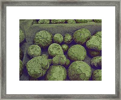 Cherimoya Framed Print