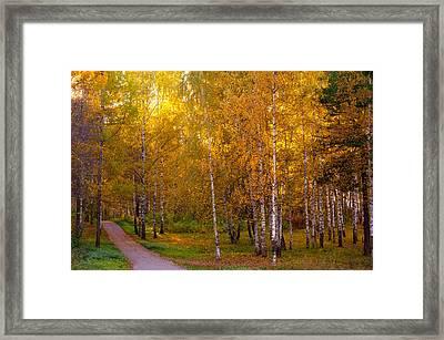 Cherished By Sun Framed Print by Jenny Rainbow