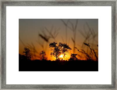 Framed Print featuring the photograph Cherished Vision by Everett Houser