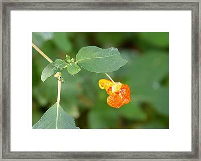 Cherokee Medicine Framed Print