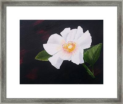 Cherokee Rose Framed Print