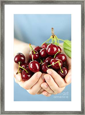 Cherries Framed Print by Elena Elisseeva