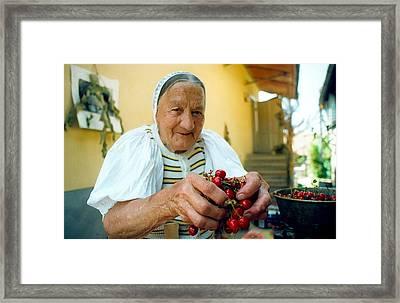 Cherries For Sale Framed Print