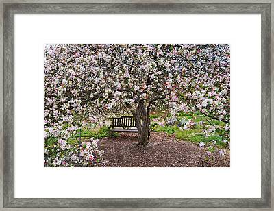 Cherries Jubilee Framed Print by Lynn Bauer