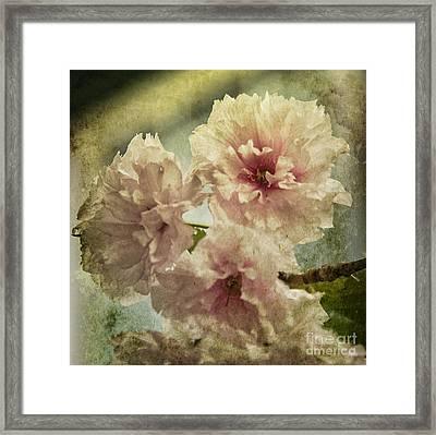 Cherries Jubilee Framed Print by Terry Rowe