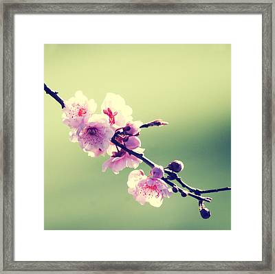 Framed Print featuring the photograph Cherry Blooms by Yulia Kazansky