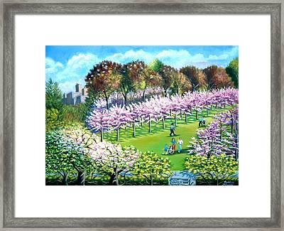 Cherry Blossems At The Brooklyn Botanical Garden Framed Print