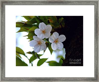 Framed Print featuring the photograph Cherry Blossom by Andrea Anderegg