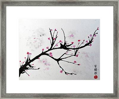 Cherry Blossom  Framed Print by Andrea Realpe