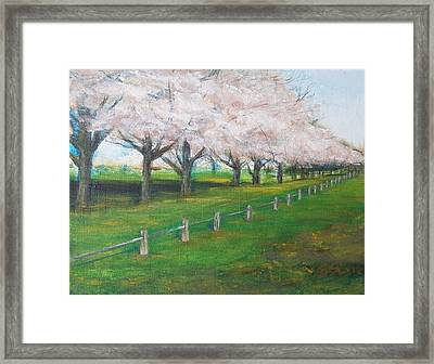 Framed Print featuring the painting Cherry Blossom Christchurch by Jane  See