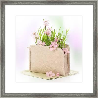 Cherry Blossom Framed Print by Amanda Elwell