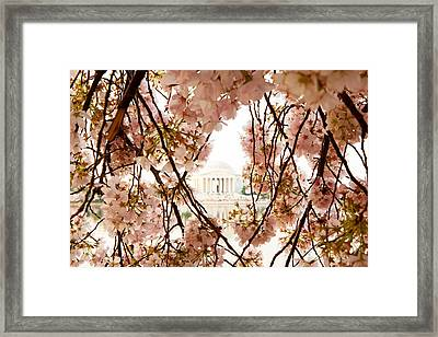 Cherry Blossom Flowers In Washington Dc Framed Print by Susan Schmitz