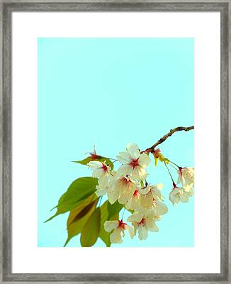 Framed Print featuring the photograph Cherry Blossom Flowers by Rachel Mirror