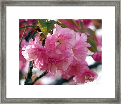 Framed Print featuring the photograph Cherry Blossom by Gena Weiser