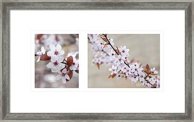 cherry blossom II Framed Print by Hannes Cmarits