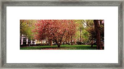 Cherry Blossom In A Park, Madison Framed Print by Panoramic Images