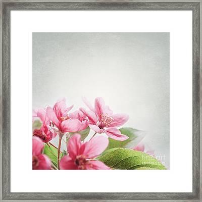 Cherry Blossom Framed Print by Jelena Jovanovic