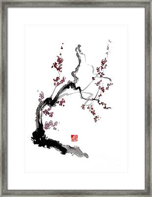Cherry Blossom Framed Print by Mariusz Szmerdt