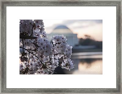 Cherry Blossom Memories Framed Print