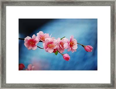 Cherry Blossom Painting Framed Print by Nicole Gardner