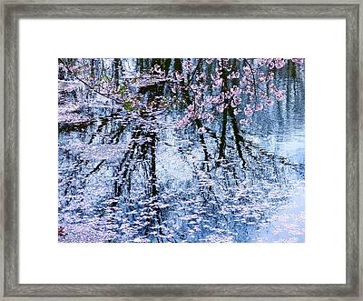 Cherry Blossom Reflections Framed Print