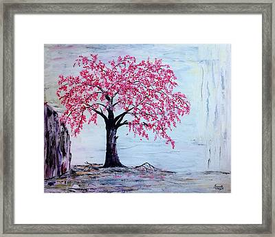 Cherry Blossom  Framed Print by Renate Voigt