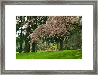 Cherry Blossom Framed Print by Sabine Edrissi