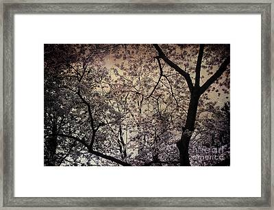 Cherry Blossom Sky Framed Print by Terry Rowe