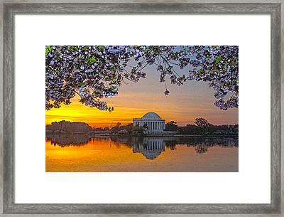 Cherry Blossom Sunrise Washington D.c. Framed Print